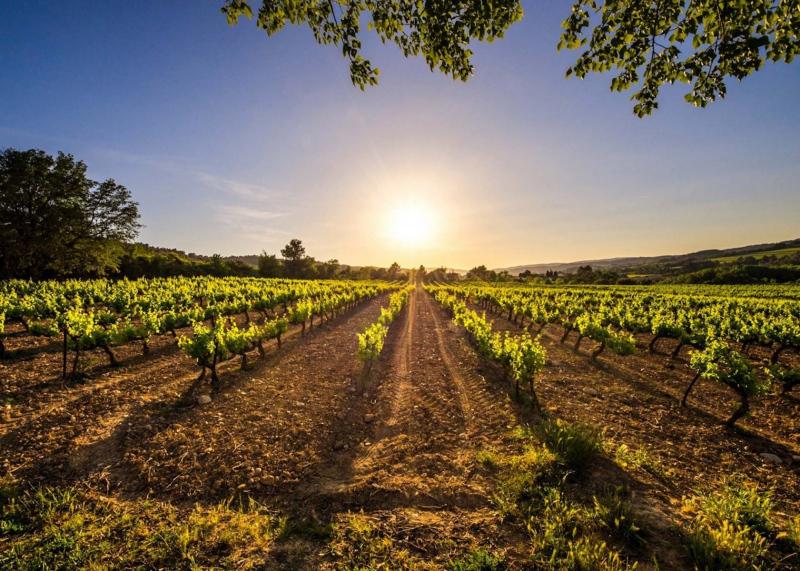 1342667-vineyard-la-rioja